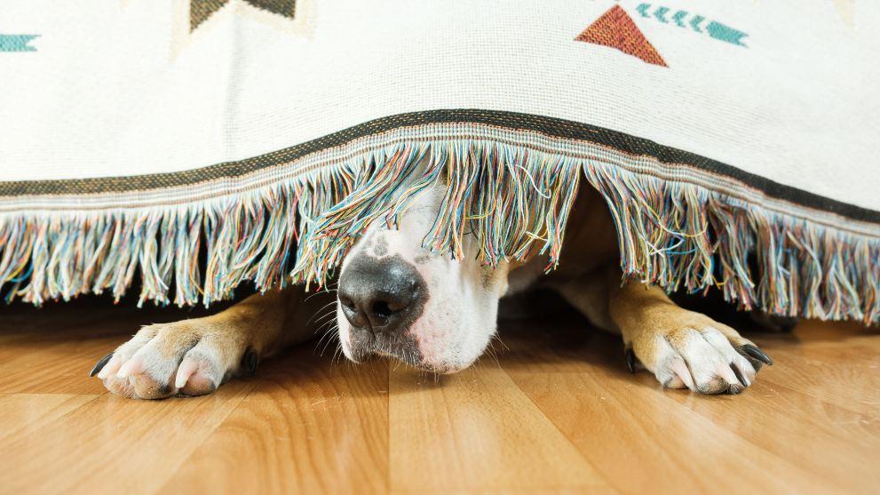 A qué puede tener miedo mi perro