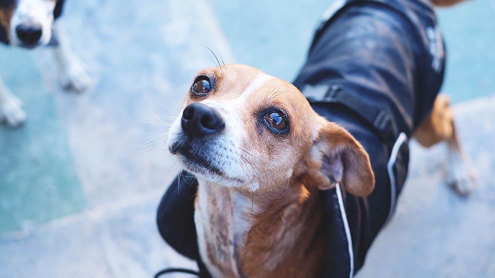 accesorios para perros - ¿Cuántas veces al día come un perro?