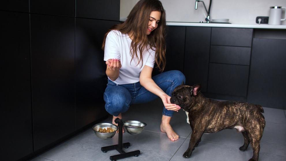 actitud perro adoptado - ¿Cuál suele ser el comportamiento de un perro adoptado?