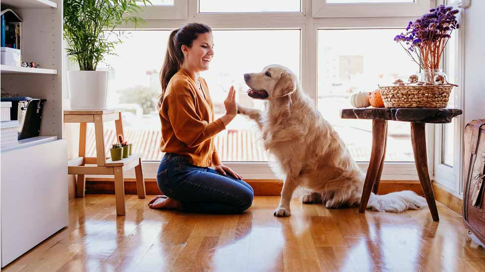 Adiestramiento canino positivo