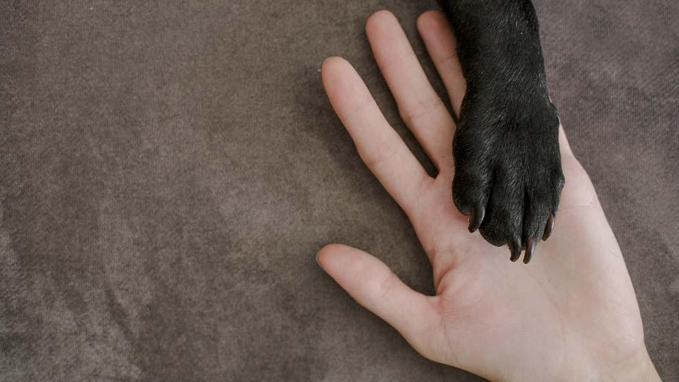 adiestramiento perros - 5 buenos consejos de adiestramiento canino