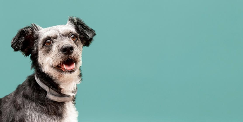 adopcion perro sin coste - ¿Cuánto cuesta adoptar a un perro?