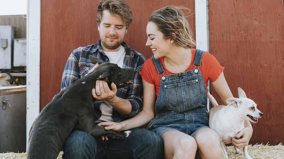adopcion perros pequenos y grandes - 7 buenas razones para apostar por la adopción de perros