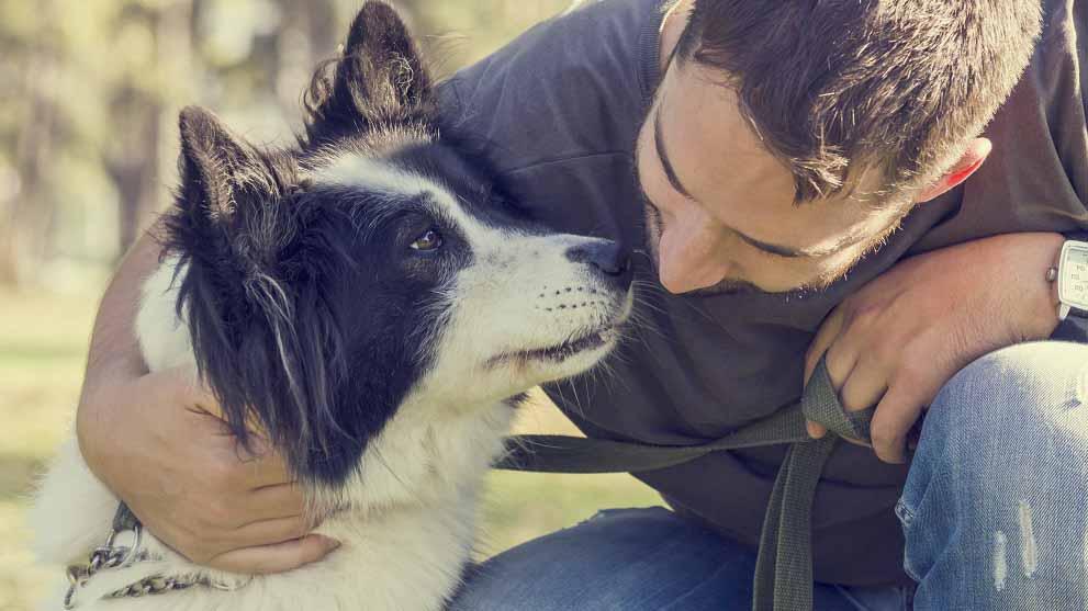 adopcion perros - Blog de perros para buenos dueños