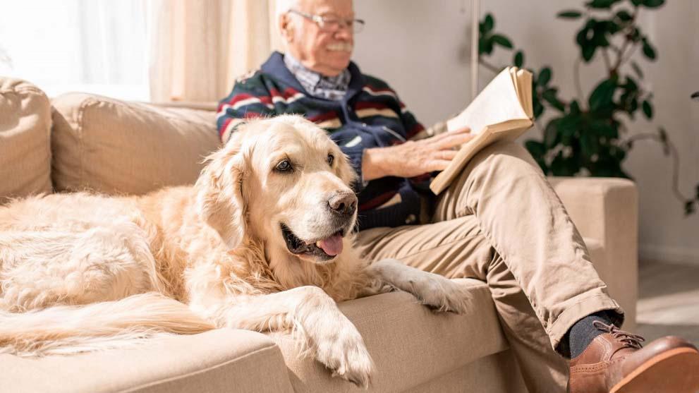 adoptar perro adulto 1 - Cuándo tener otro perro: Busca el momento perfecto