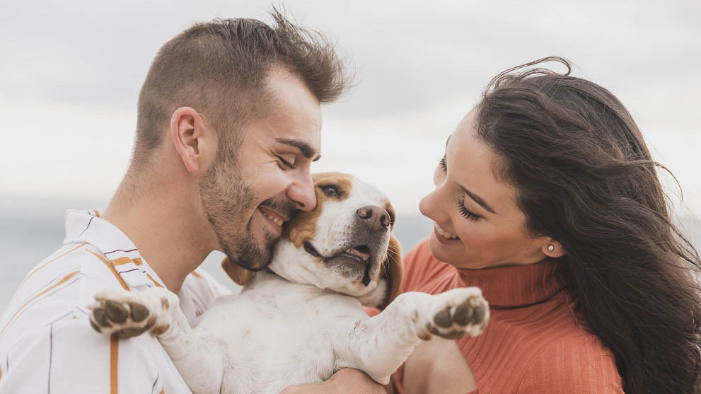 adoptar perros mayores - Por qué adoptar a un perro adulto y darle una vida mejor