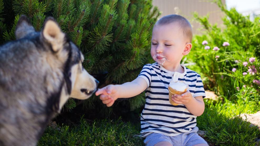 alimentos nocivos perros - 13 alimentos prohibidos para los perros