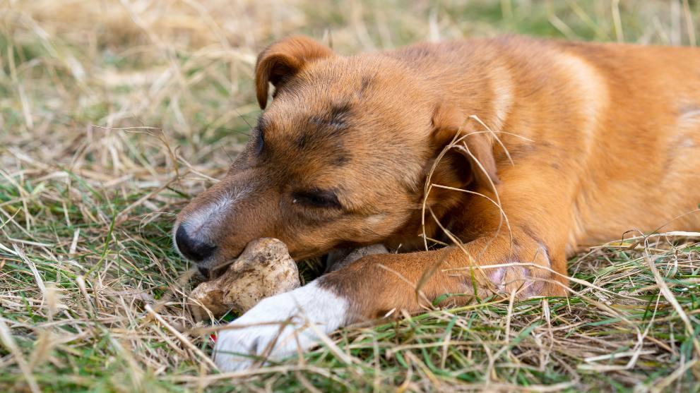 alimentos puede sentar mal perros - 13 alimentos prohibidos para los perros