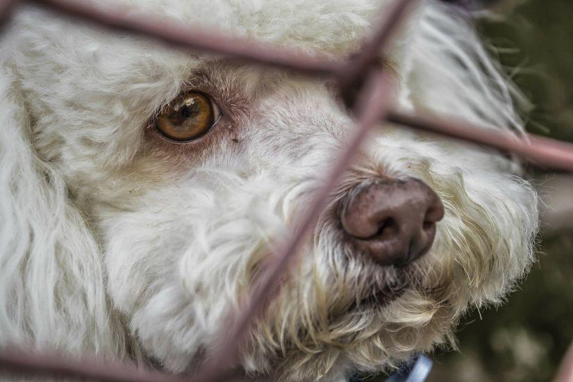 animales adopcion - La situación de las protectoras de animales tras la paralización de las adopciones por el COVID-19