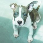 beba 150x150 - Comprar perro Ciudad Real