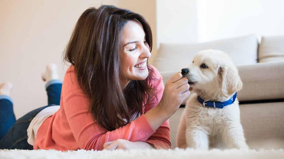 cachorros adorables - Enfermedades caninas: las razas de perro más vulnerables