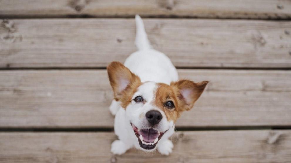 casitas y parques para perros - Cómo elegir el mejor parque para perros
