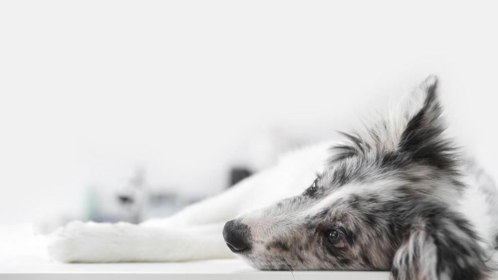 Cómo actuar con un perro con ansiedad