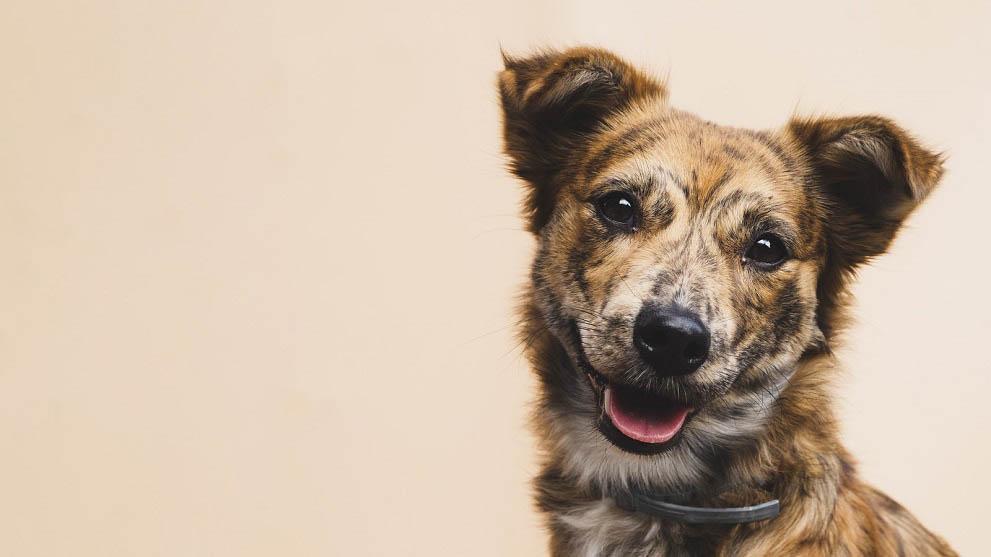 como adiestrar a un cachorro - Trucos para educar a un cachorro