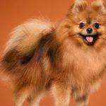 como cepillar tu perro 150x150 - 7 tips para cepillar a tu perro