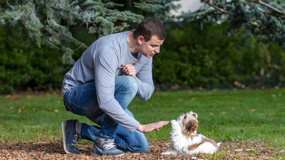 Cómo educar a un perro cachorro