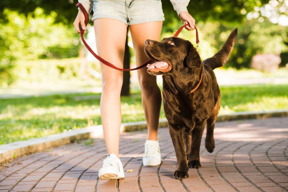 como limpiar patas perro despues pasear - ¿Cómo limpiar de forma segura las patas de mi perro después de su paseo?