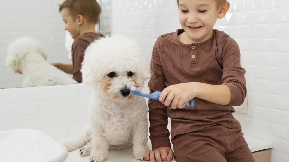 como limpiarle dientes perro - Blog de perros para buenos dueños