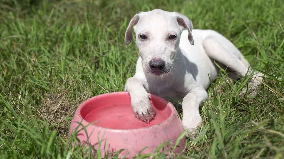 como poner a dieta a un perro - Razas de perros sin pelo para personas con alergia. ¡Descúbrelas todas!