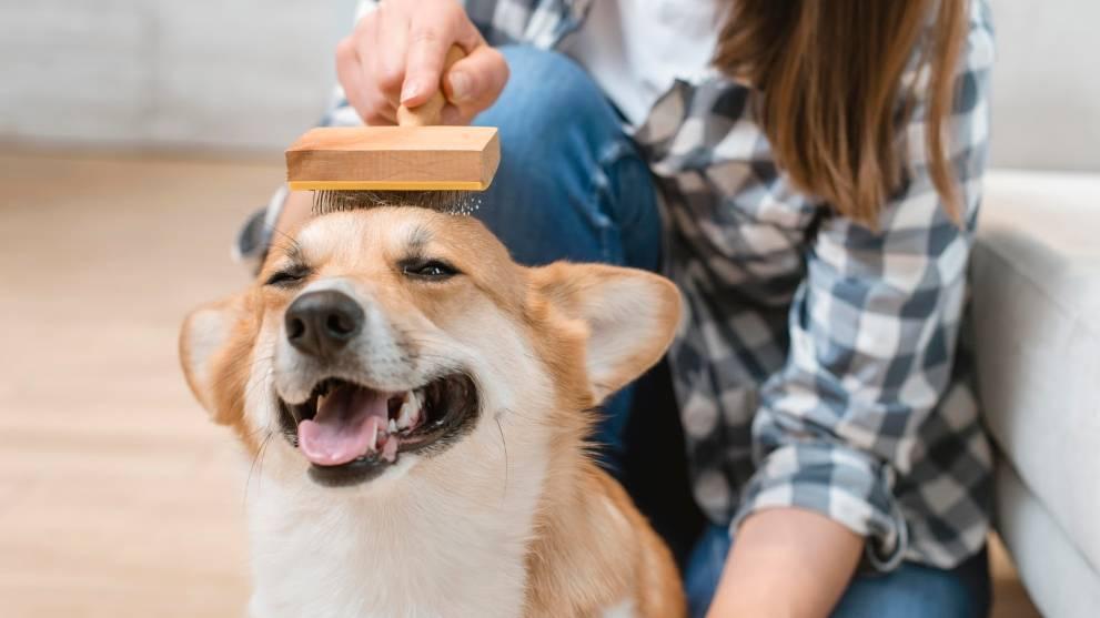 como se cepilla perro - 11 razones que demuestran que adoptar un perro es mejor que comprarlo