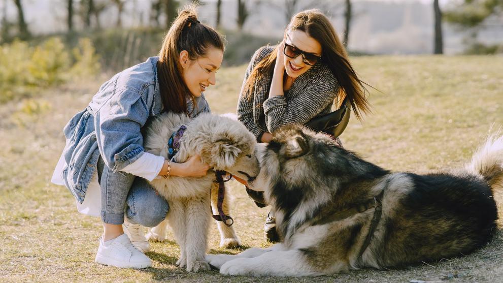 Cómo hacer que tu perro socialice