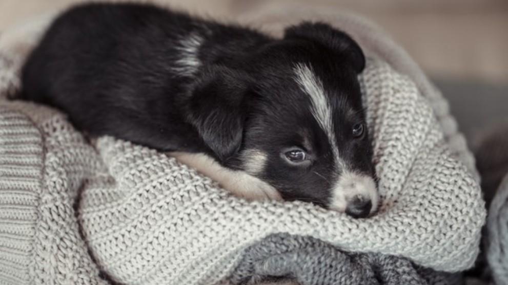 conducta perro adoptado - ¿Cuál suele ser el comportamiento de un perro adoptado?