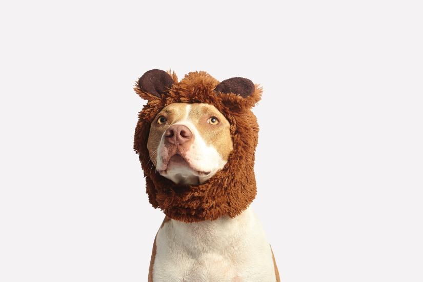 consejos cuarentena perros - Guarderías para perros: ¿valen la pena?