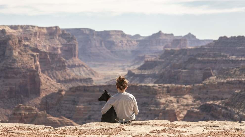 consejos viajar perro - ¿Cuánto cuesta adoptar a un perro?