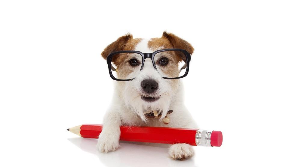 contrato de adopcion de perros - Viaja con tu perro en avión: cómo preparar a tu peludo