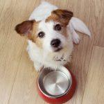 cuantas veces debe comer perro dia 150x150 - ¿Cuántas veces al día come un perro?
