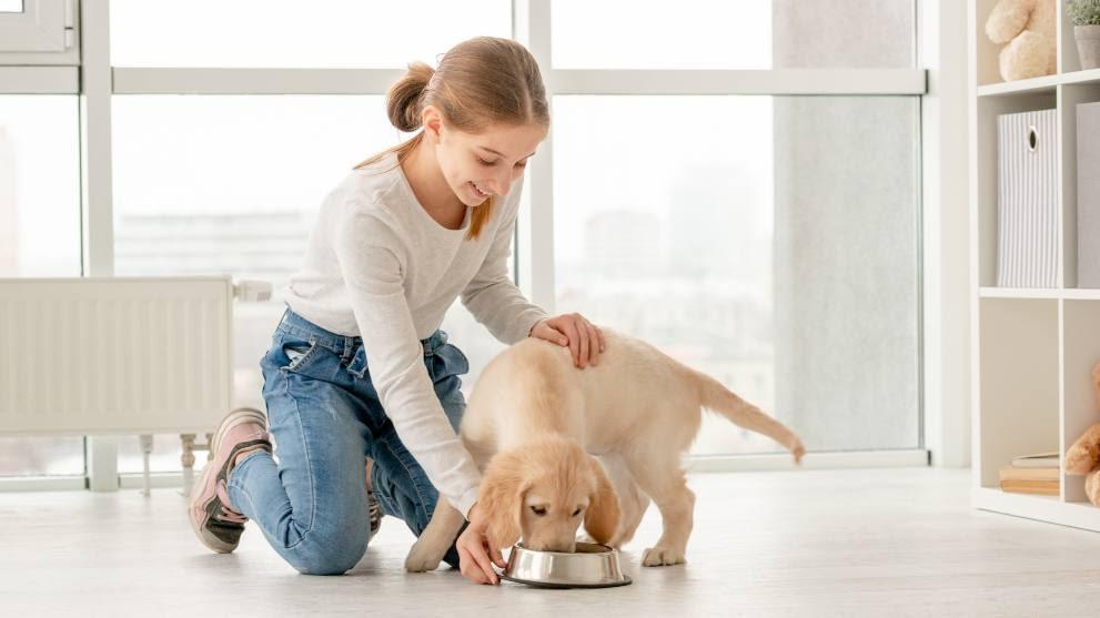 Cuántas veces debe comer un perro al día