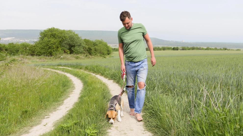 cuantas veces paseo al perro - Cómo se comportan los perros con las embarazadas