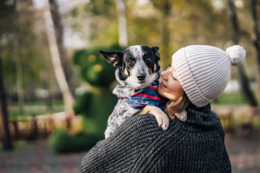 cuidados basicos perro - Teletrabajo: la oportunidad para disfrutar con tu perro en casa