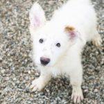 darwin 150x150 - Comprar perro Ciudad Real
