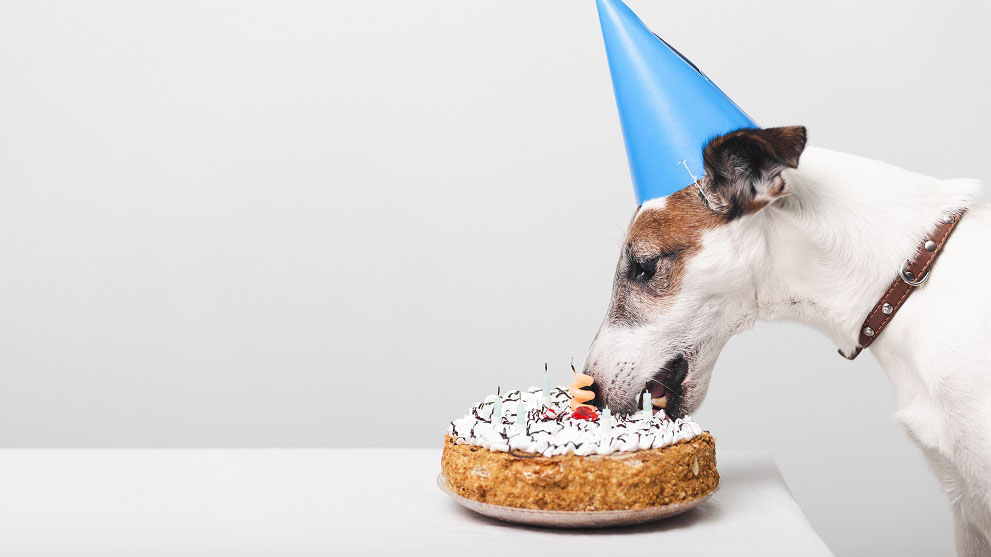 dieta natural perros - Dieta Barf: Alimenta a tu perro de manera natural