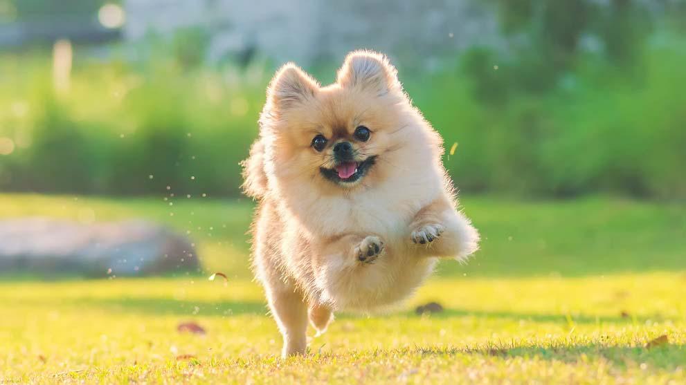 dieta y ejercicio para perros - Cómo poner a dieta a tu perro con éxito