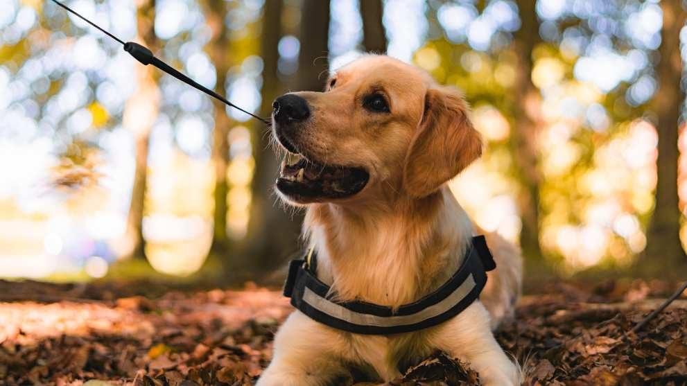 donde adoptar perro - Todo lo que necesitas saber antes de adoptar un perro