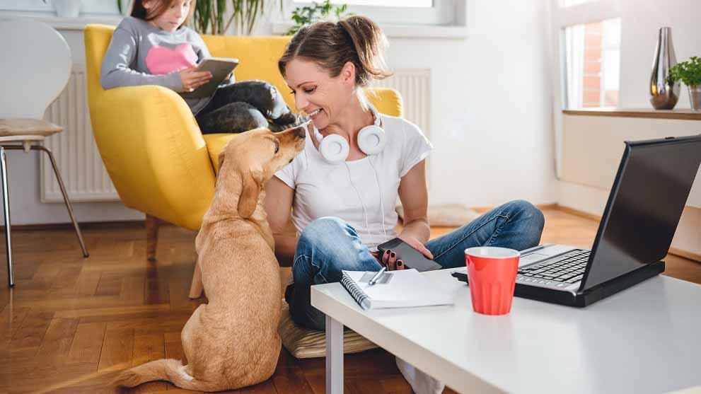 elegir residencia canina - Cómo elegir el mejor parque para perros