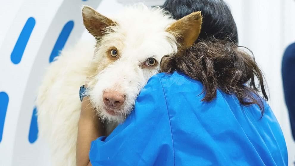 enfermedades caninas - Qué accesorios para perros necesita tu mejor amigo canino