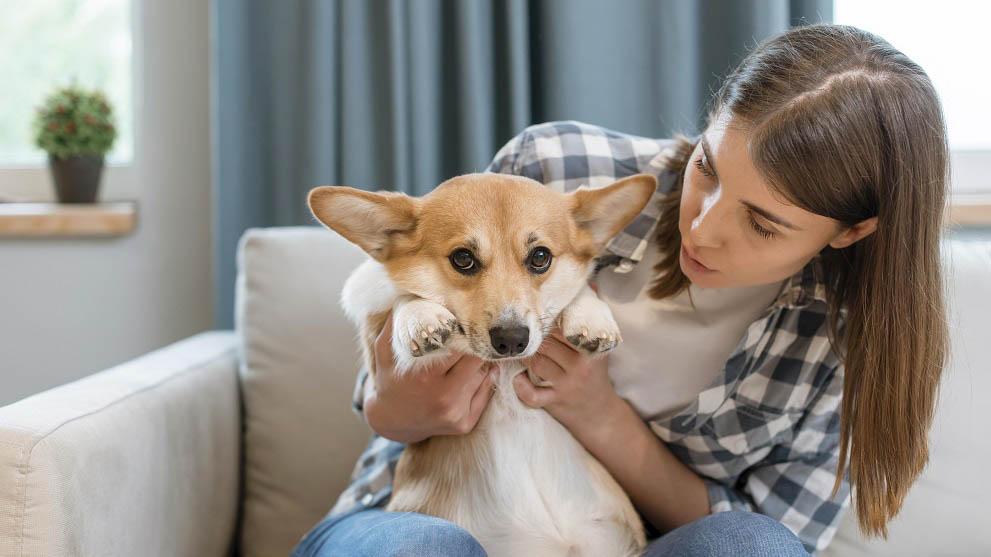 esterilizacion de perros - Mitos sobre la esterilización de perros