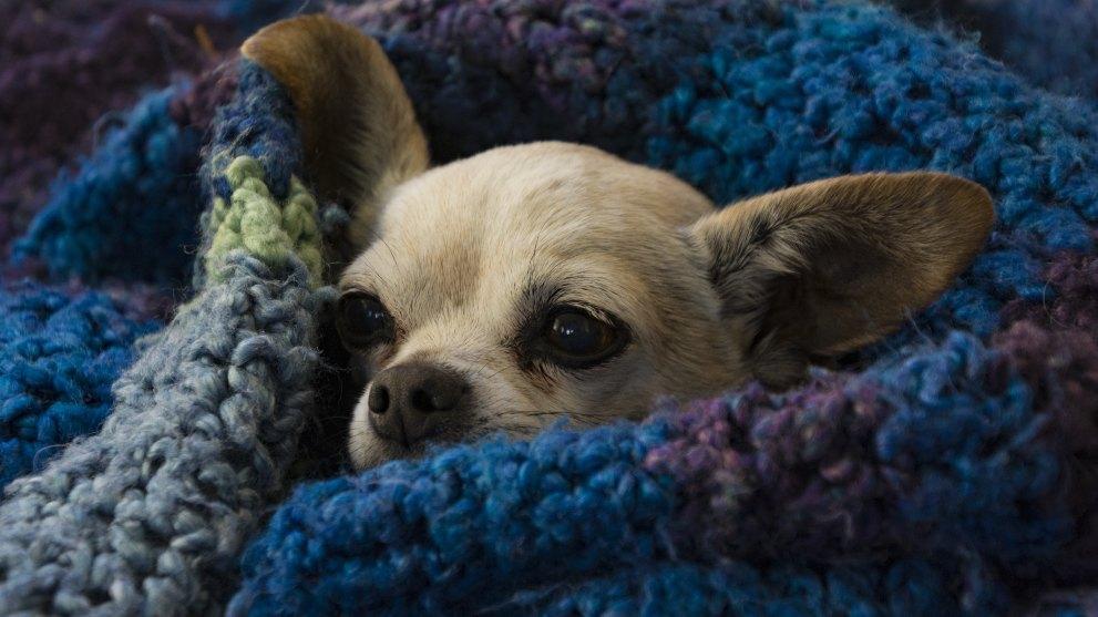evitar tenga frio perro - ¿Los perros pasan frío en invierno?