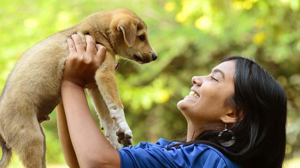 formulario adopcion de perros - ¿Qué es el formulario de adopción de perros?