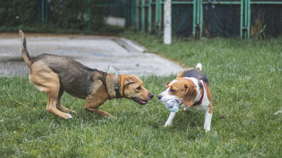 Valen la pena las guarderías caninas