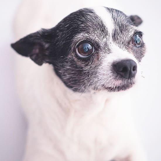 guasa perra peque - Inicio