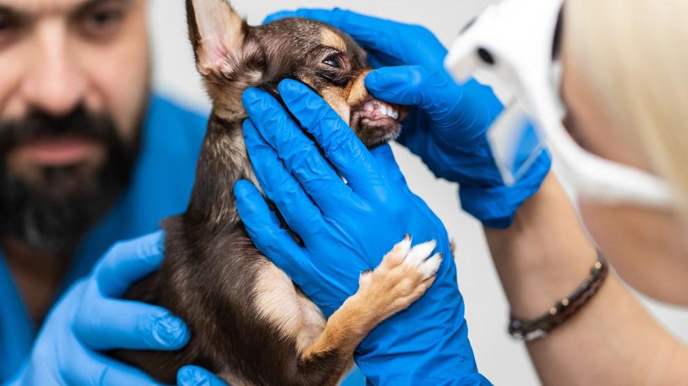 higiene bucodental perro - Las mejores opciones para lavarle los dientes a tu perro