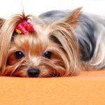 introducir casa perro adoptado 1 150x150 - Cómo preparar tu casa para la llegada de un perro adoptado