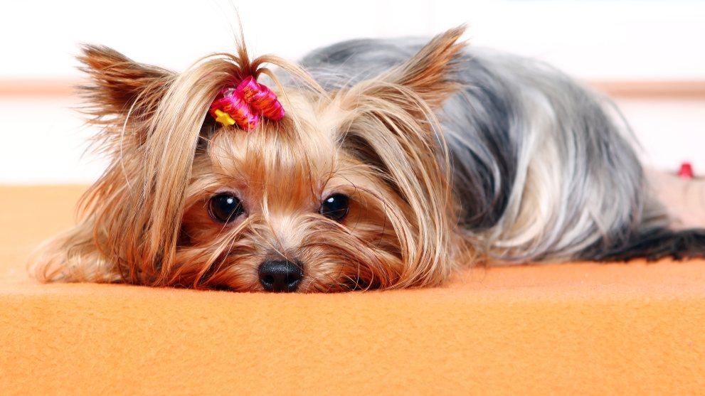 introducir casa perro adoptado 1 - Cómo preparar tu casa para la llegada de un perro adoptado
