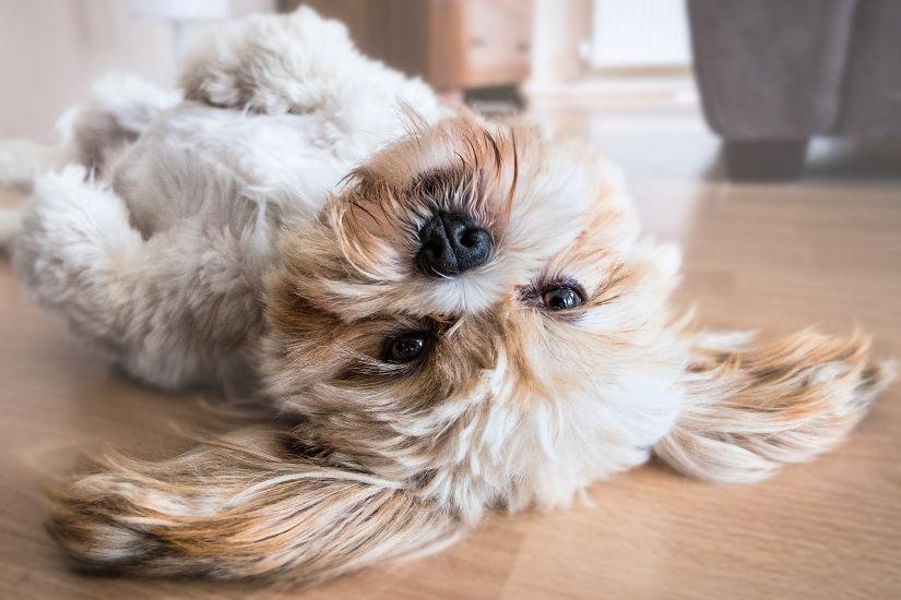 introducir perro adoptado casa - Teletrabajo: la oportunidad para disfrutar con tu perro en casa