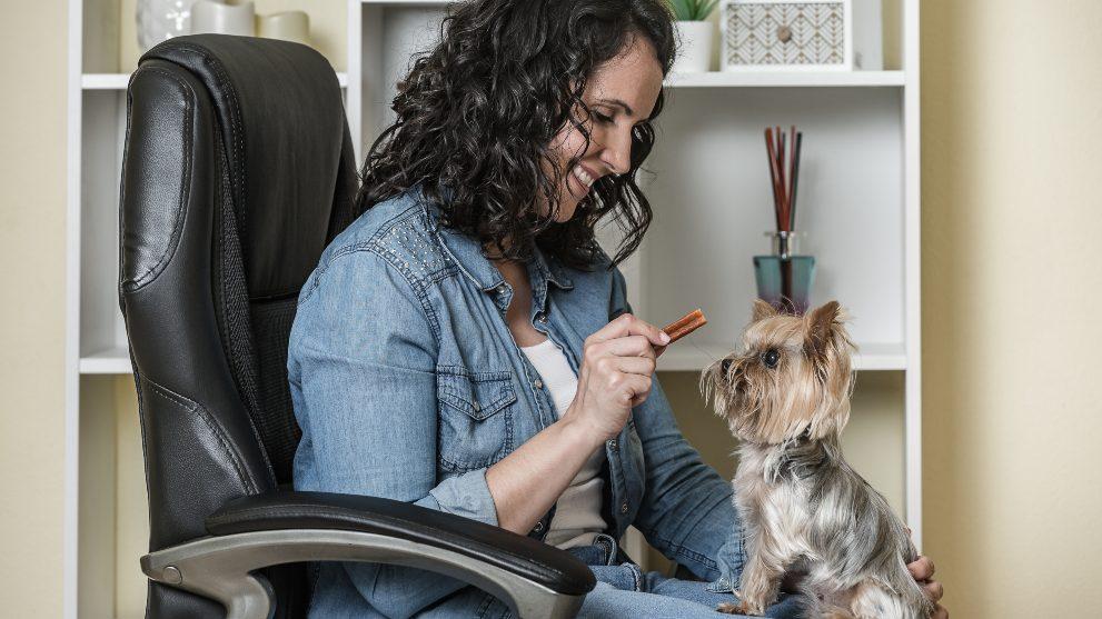 juega con perro casa - Teletrabajo: la oportunidad para disfrutar con tu perro en casa
