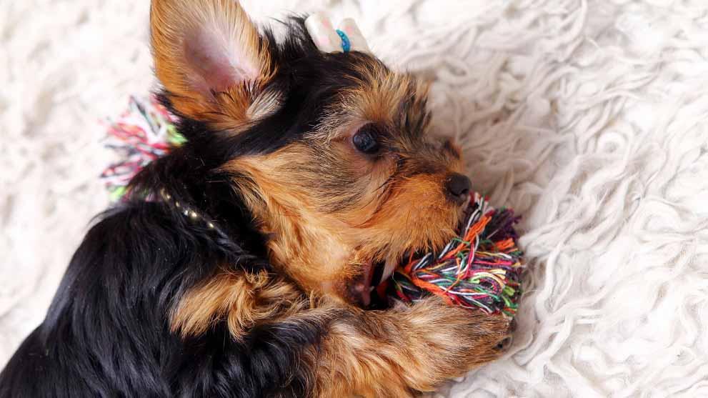 juguetes divertidos perros - Juguetes para perros divertidos y originales